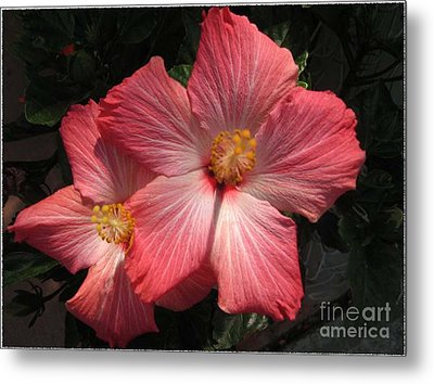 Metal Print featuring the photograph Star Flower by Barbara Griffin
