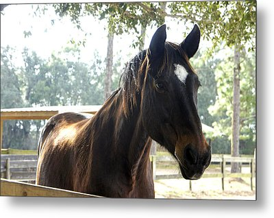Star Metal Print by Laurie Perry