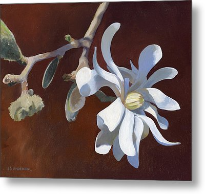 Metal Print featuring the painting Star Magnolia by Alecia Underhill