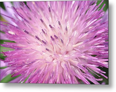 Metal Print featuring the photograph Starburst by Sabine Edrissi