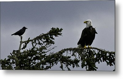 Metal Print featuring the photograph Stare Down by Betty Depee