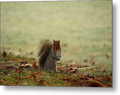 Metal Print featuring the photograph Stare Down by Lynn Hopwood