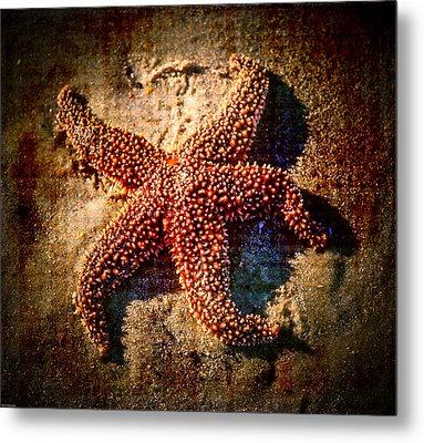 Starfish 2 Metal Print by Kathleen Scanlan