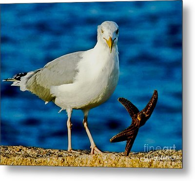 Starfish And Seagull Dance On The Rocks Metal Print by Carol F Austin