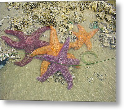 Starfish Love-oregon Coast Metal Print