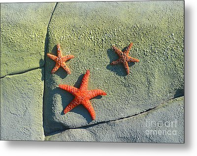 Starfish On The Rocks Metal Print by Luther Fine Art
