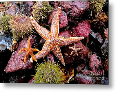 Starfish Metal Print by Sarah Mullin