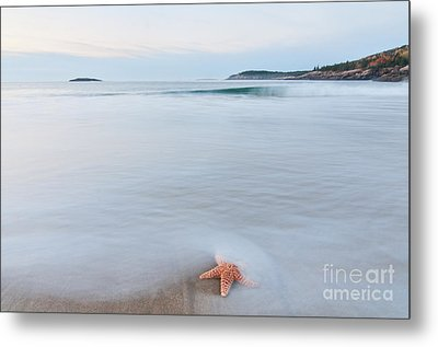 Starfish Metal Print by Sharon Seaward