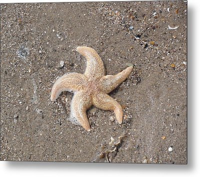 Metal Print featuring the photograph Starfish by Tiffany Erdman