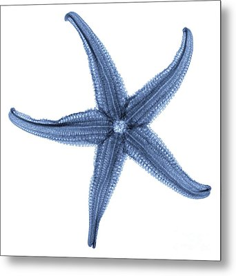Starfish X-ray Metal Print by Gustoimages