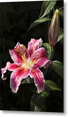 Stargazer Bloom And Bud Metal Print