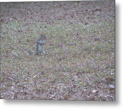 Staring Squirrel Metal Print by Rickey Rivers Jr