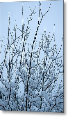 Metal Print featuring the photograph Stark Beauty - Snow On Branches by Denise Beverly