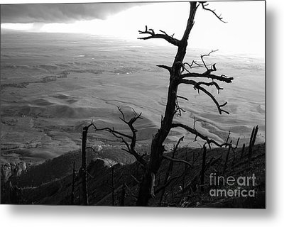 Stark Tree Metal Print by Mary Carol Story