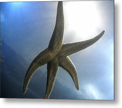 Metal Print featuring the photograph Starlight by Kristen R Kennedy