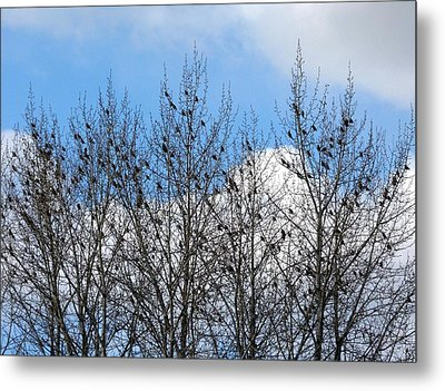 Starlings In The Cottonwoods Metal Print