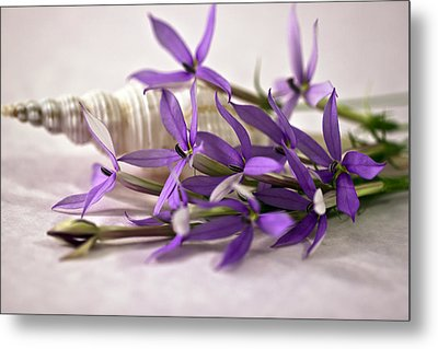 Starshine Laurentia Flowers And White Shell Metal Print by Sandra Foster