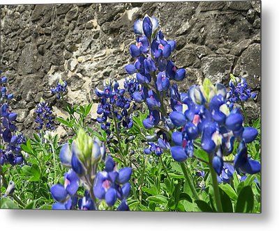 Metal Print featuring the photograph State Flower Of Texas - Bluebonnets by Ella Kaye Dickey