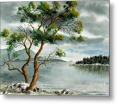 Stately Arbutus Metal Print by Frank Townsley