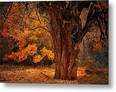 Stately Oak Metal Print by Priscilla Burgers