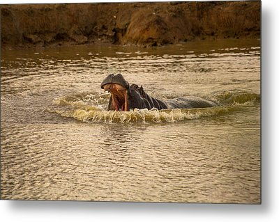 Stay Away From My Waters Hippo Metal Print by Eti Reid
