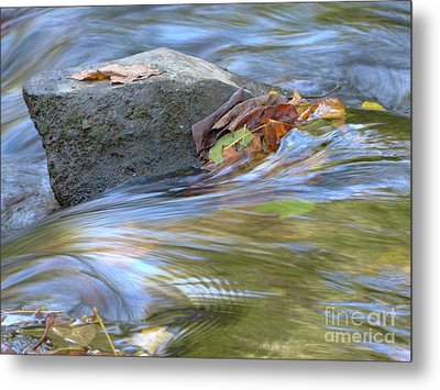 Metal Print featuring the photograph Steadfast by Jane Ford