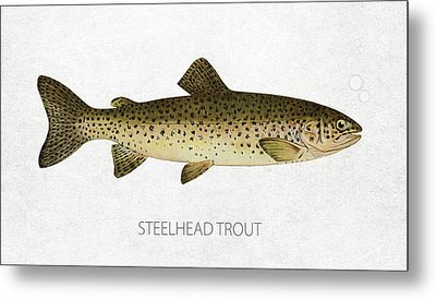Steelhead Trout Metal Print by Aged Pixel
