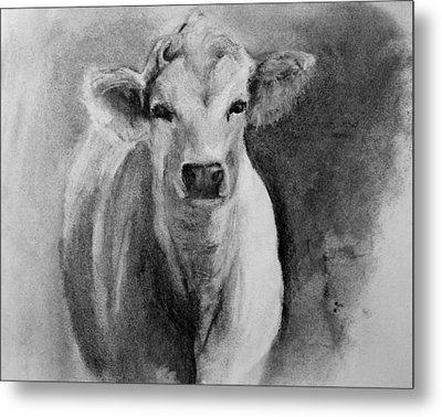 Steer- Drawing From Life Metal Print