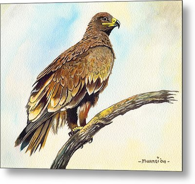 Steppe Eagle Metal Print by Anthony Mwangi