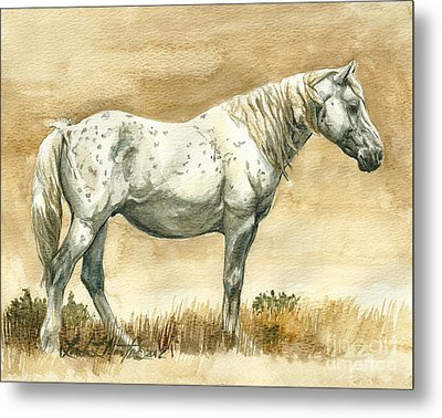 Sterling Wild Stallion Of Sand Wash Basin Metal Print