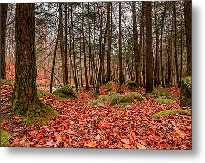 Metal Print featuring the photograph Stickney Brook Leaves by Jeremy Farnsworth