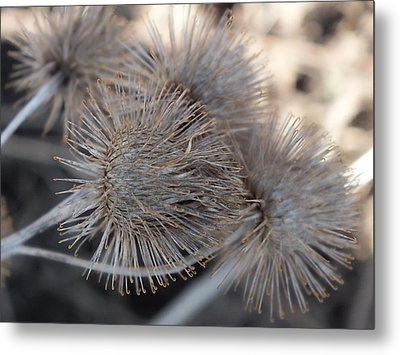 Metal Print featuring the photograph Sticky Stuff by Gene Cyr