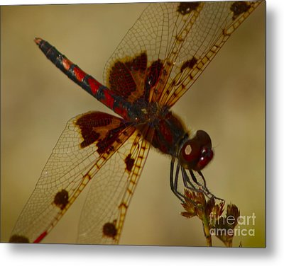 Metal Print featuring the photograph Still by Alice Mainville