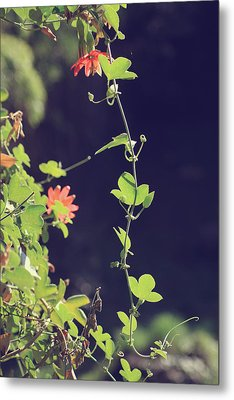 Still Holding On Metal Print by Laurie Search