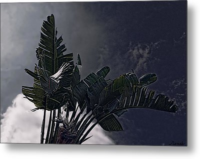 Metal Print featuring the photograph Banana Tree -still In A Storm #3  by Renee Anderson