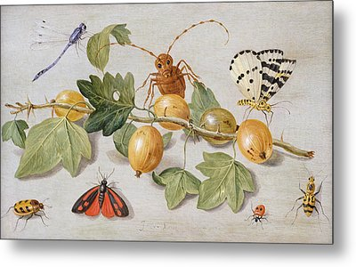 Still Life Of Branch Of Gooseberries Metal Print by Jan Van Kessel