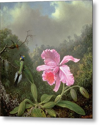 Still Life With An Orchid And A Pair Of Hummingbirds Metal Print by Martin Johnson Heade