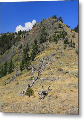 Metal Print featuring the photograph Still Standing by Kathleen Scanlan