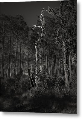 Still Standing Metal Print by Mario Celzner
