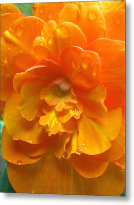 Still The One - Images From The Garden Metal Print