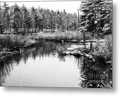 Still Waters Metal Print by Sue OConnor
