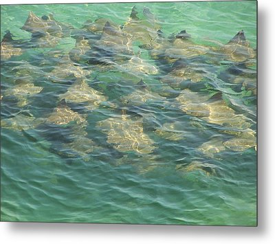 Metal Print featuring the photograph Stingray A by Michele Kaiser