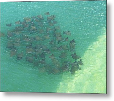 Metal Print featuring the photograph Stingray B by Michele Kaiser