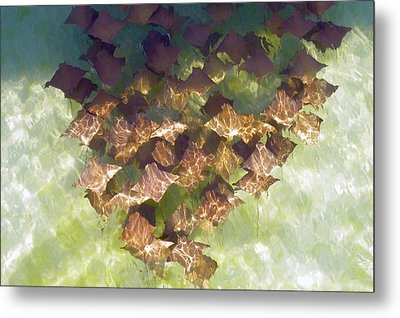Metal Print featuring the photograph Stingrays At Navarre Beach In Florida by Teresa Schomig