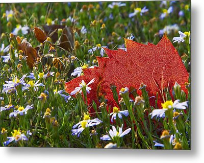 Metal Print featuring the photograph Stocking Up For The Winter by Gary Holmes