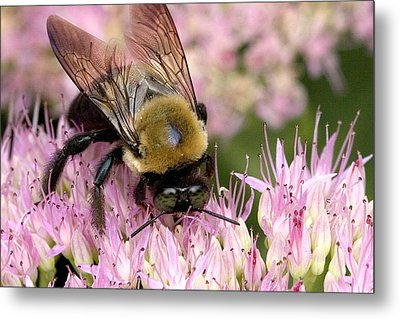 Metal Print featuring the photograph Stone Mountain Bumble Bee by Gene Walls
