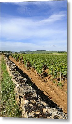 Stone Wall. Vineyard. Cote De Beaune. Burgundy. France. Europe Metal Print