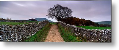 Stone Walls Along A Path, Yorkshire Metal Print by Panoramic Images