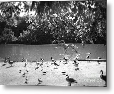 Metal Print featuring the photograph Stony Brook Pond by Paul Cammarata