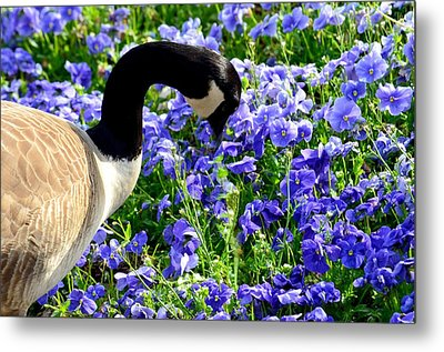 Stop And Smell The Flowers Metal Print by Maria Urso